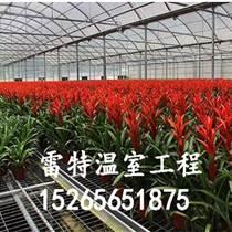 供應陽光板蔬菜大棚 陽光溫室廠家 物美價廉