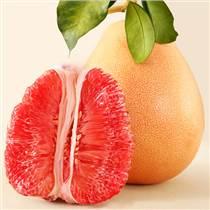 广西大量供应三红蜜柚苗,选择三红蜜柚苗的?#27426;?#20043;选
