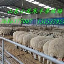 山東濟寧規模化小尾寒羊養殖場