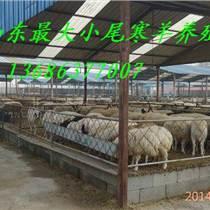 供應山東最大小尾寒羊養殖場