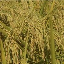 五常稻花香大米,米稻库合作社,五常稻花香大米报价
