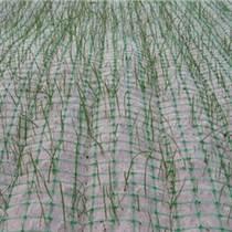 生態植被毯護坡