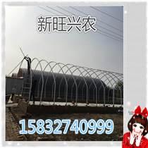 新旺兴农大棚安装 1104养殖大棚专业建设