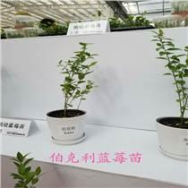 草莓苗种植 1-3年草莓树苗采购基地