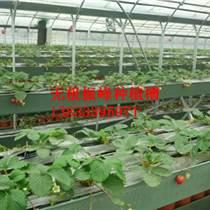 杭州蔬菜種植槽價格