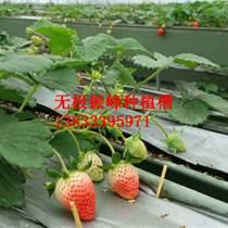 大棚草莓種植槽生產廠家