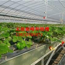 河北草莓立體式種植槽價格