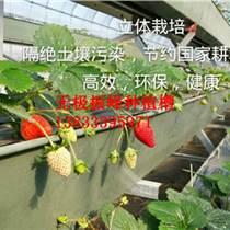邢臺生態環保草莓種植槽