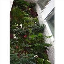 生態 植物墻,植物墻,銘秀立體(多圖)