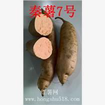邢台哪家红薯苗好供应服务周到