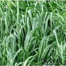 观赏小?#20113;?#21335;瓜种子 观赏优质套餐鸳鸯梨南瓜种苗