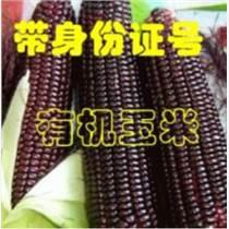 玉米种子二维码溯源系统开发