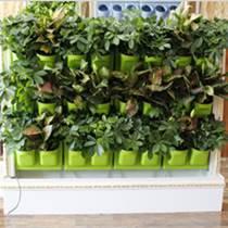 都市绿缘2016新款绿植壁画植物墙(大号)