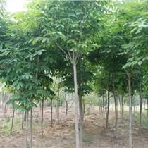 种子花卉种苗棕榈类植物、丝棉木