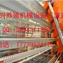 西平金兴鸡笼直销各种镀锌鸡笼及养鸡设备