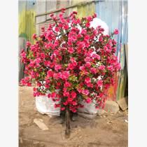 北京哪里有賣仿真樹櫻花樹
