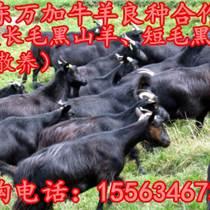 甘肅馬犬養殖場