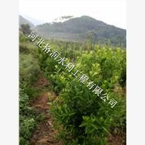 質量保障果樹水管邯鄲臨漳果樹滴灌農作社