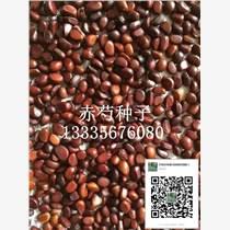 求購亳州芍藥種子價格