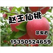 邯鄲蘋果苗批發_趙王仙桃_桃樹苗產量高