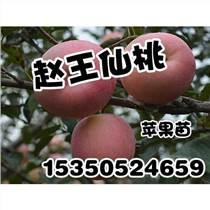 邯郸苹果苗品质好_赵王?#21830;襙毛桃苗