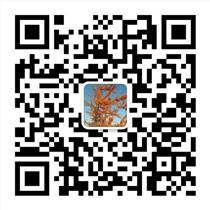 鼎鑫沙棘排毒项目招商全国加盟热线
