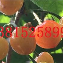 大型梅花樹古樁、蘇州市梅花樹、私家庭院別墅綠化工程、蘇州梅花基地、景觀設計綠化施工