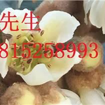 桂花樹苗木基地、蘇州市綠化景觀工程施工、蘇州花木苗木