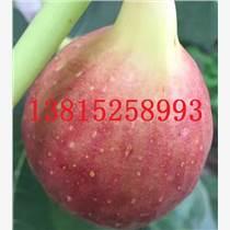 蘇州綠化樹苗價格、蘇州香樟樹、工程綠化苗木基地、蘇州苗圃苗木、別墅庭院綠化工程
