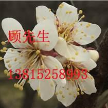 苏州景观绿化设计、苏州别墅花园绿化、苏州园林设计工程、苏州园林景观绿化设计公司
