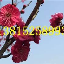 蘇州綠化苗木、庭院景觀綠化設計、蘇州苗圃基地、蘇州花木市場、蘇州別墅綠化景觀工程