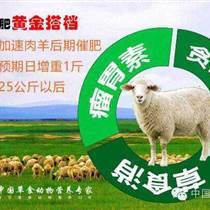 英美爾肉羊飼料怎么樣31英美爾羊專用預混料