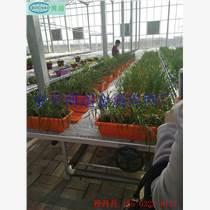 苗床网可以作为花卉床