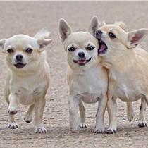 双流宠物|宠家乐宠物用品|宠物用具