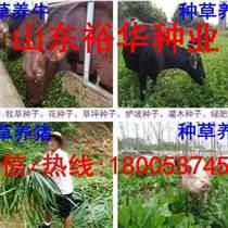 现在适合种植苜蓿草种子不苜蓿草种子多少钱一斤