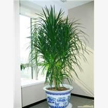 天津绿植租摆公司天津植物租赁公司天津花卉销售公司