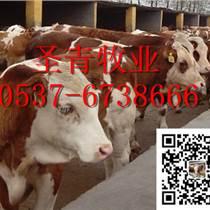 波尔山羊、改良牛、鲁西黄牛、夏洛莱牛、肉牛犊