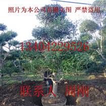 蘇州別墅苗木批發、蘇州庭院綠化苗木、蘇州別墅花園景觀樹木