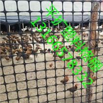 供應廠家直銷150g養雞用塑料土工格柵圍欄