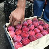 各种水果批发代销