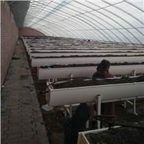 草莓種植槽 立體種植槽