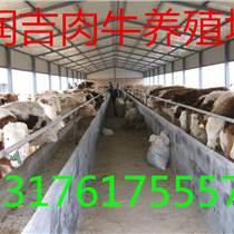 南宁小牛犊多少钱价格