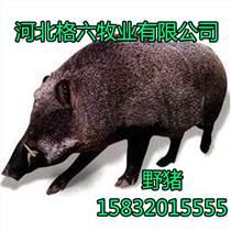 野豬養殖,品質保證,純野豬