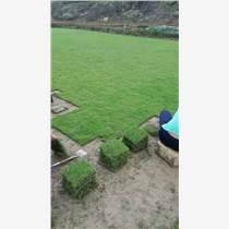 寧德市東僑綠化草皮|福安市草坪|福鼎市綠化工程草皮