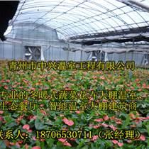供應陽泉大型鋼結構花卉培育溫室建造
