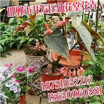 邯郸花卉,邯郸花卉厂家,仙花堂花卉