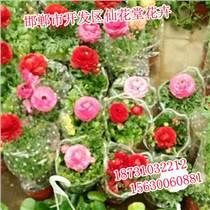 邯郸花卉公司,邯郸花卉价格,仙花堂花卉