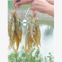 农丰龙虾养殖 备受关注和认可