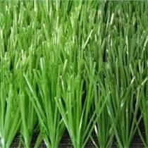 运之家,公园单丝人造草坪,陕西绿昂体育