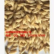進口大麥,澳麥,澳大利亞大麥